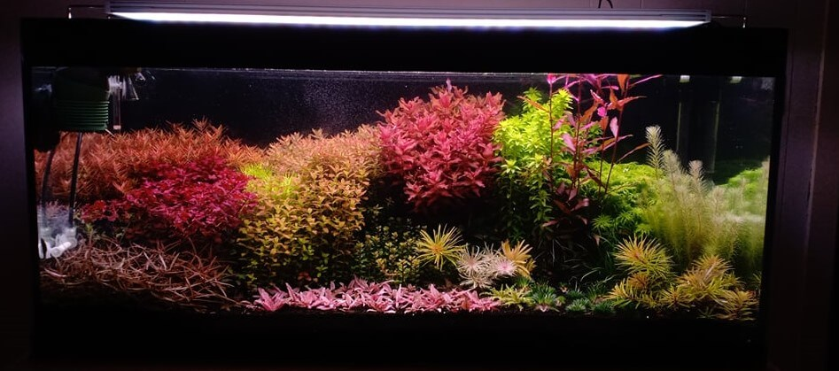 Dutch Style Aquascaped by John Michael Caamic Rivera Philippines