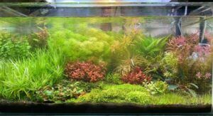 Dutch Style Aquascaped by Kyle Castaritas Philippines
