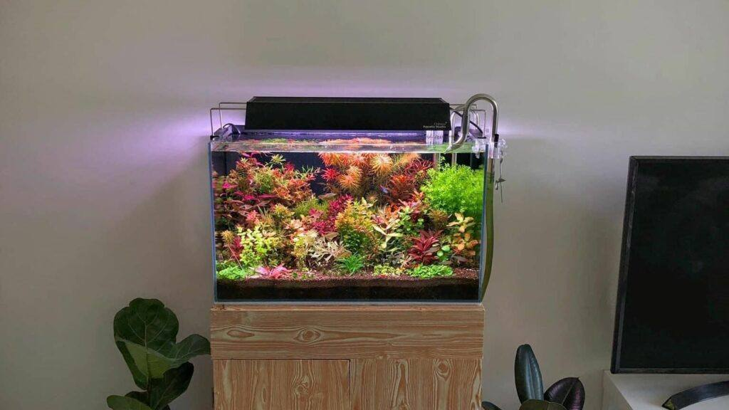 Dutch Style Aquascaped by Sam Bolivar Philippines