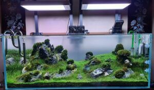 Iwagumi Style Aquascaped by Ayong Go Philippines