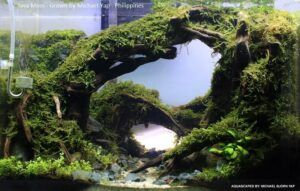 Java Moss Grown by Michael Yap Philippines