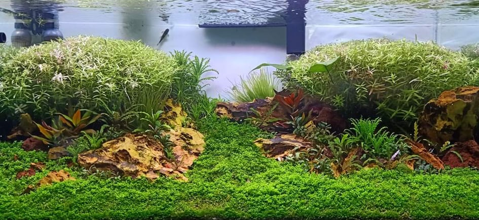 Nature Style Aquascaped by Reynold San Andres Philippines