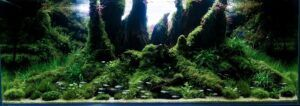 Nature Style 'Nature's Stump' Aquascaped by Matthew Manes Philippines