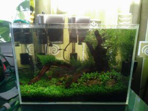 HOB Filter Aquascaped by John Michael Limjoco Philippines