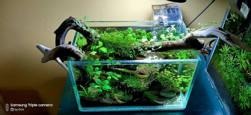 HOB Filter Aquascaped by Omar Krishnan Afuang Philippines