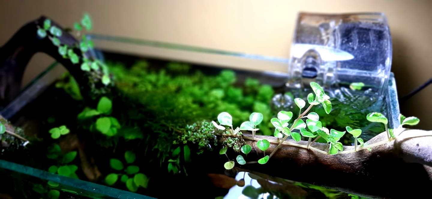 HOB Filter Close Up Aquascaped by Omar Krishnan Afuang Philippines