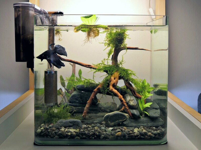 HOB Filter Nano Tank Aquascaped by Bet Señeres-Layog Villareal Philippines