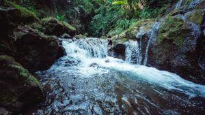 Nature's Natural Filtration