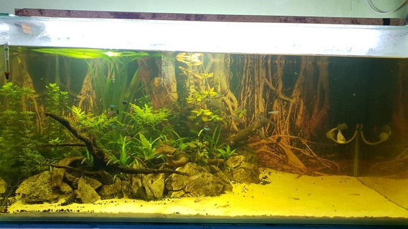 Using Corner Filter Aquascaped by Gray Paulino Philippines