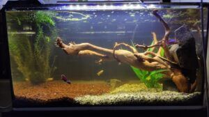 Using a Corner Filter Aquascaped by Deem Venson Philippines