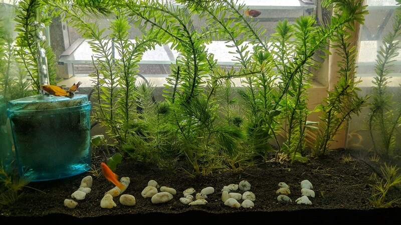 Using a Corner Filter Aquascaped by Randel Hilario Philippines