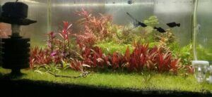 Using a Sponge Filter Aquascaped by Hen Cong Jon Philippines