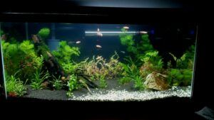 Using an Internal Filter Aquascaped by Augustus Alejandro Zenit Philippines