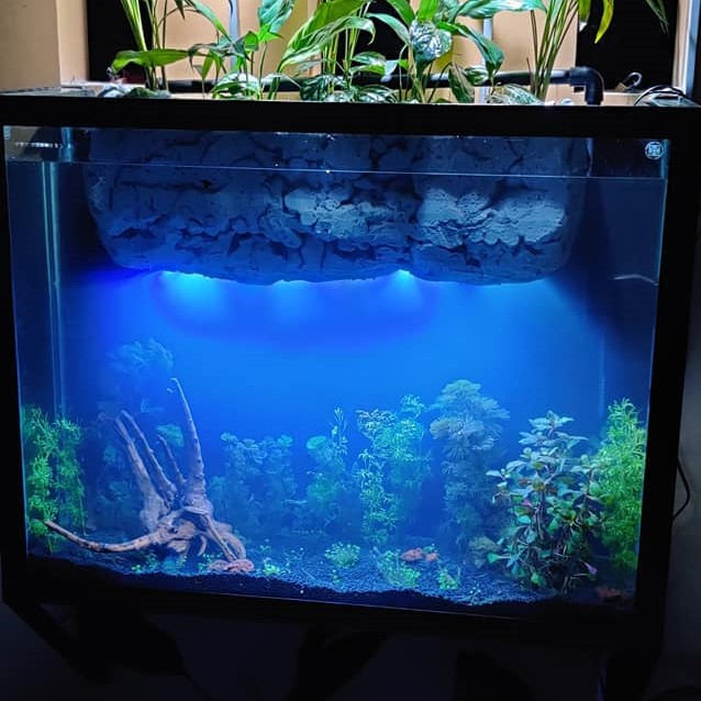 Using an Internal Filter - Aquascaped by Khristian Ross Santos Philippines