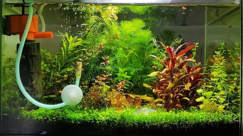 Using an Internal Filter Aquascaped by Melchin Origenes Tapan Philippines