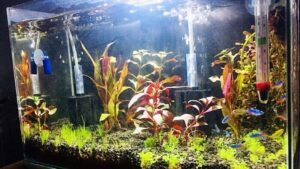Using two Sponge Filters Aquascaped by Christian Cortes Philippines