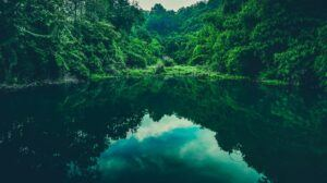 A Body of Water in a Tropical Forest