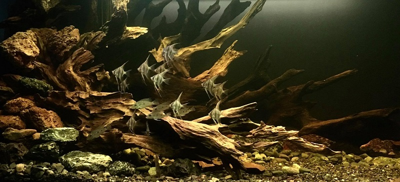 B3 Class South American Biotope Aquascaped by Nigel Sia Philippines