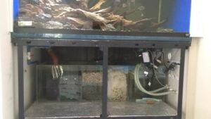 Bottom Sump Filter for a Biotope Tank Designed by Nigel Sia Philippines