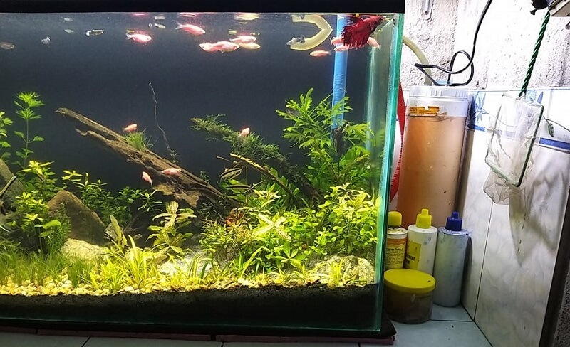 DIY Canister Filter Aquascaped by Mark Christian Lacson Laguda Philippines