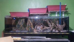 DIY Overhead Sump Aquascaped by Kp Pasia Philippines