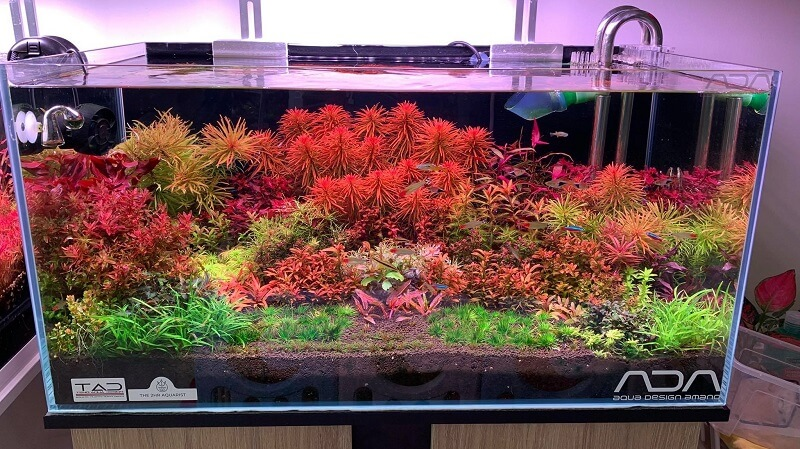 Dutch Style Aquascaped by Lester Plata Philippines