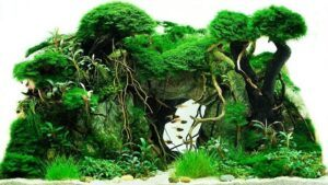 Hardscape Diorama Style Aquascaped by Andrian Jutba Philippines