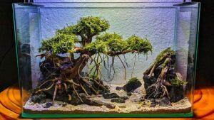 Hardscape Diorama Style Aquascaped by Moss Rhem Philippines