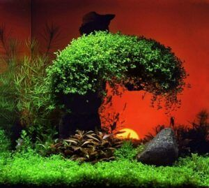 Nature Style Aquascaped by Andrian Jutba Philippines