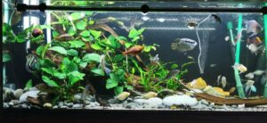 Nature Style Triangle Layout Aquascaped by Moss Rhem Philippines