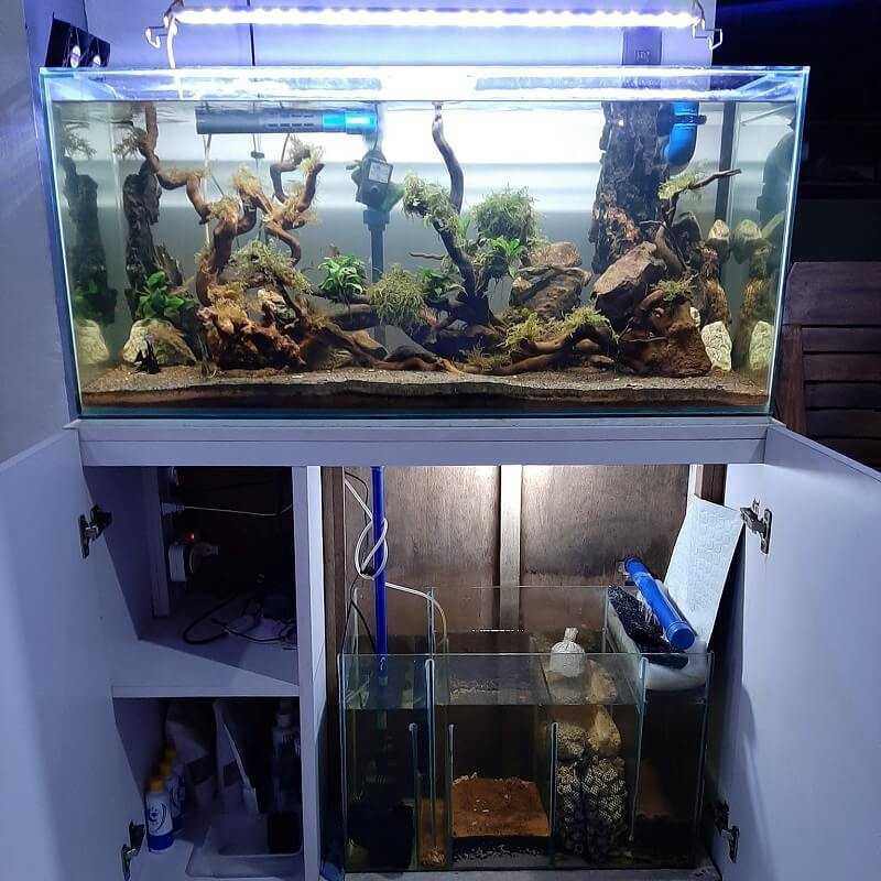 Sump Filter Under the Main Tank Aquascaped by Yong Uayan Philippines