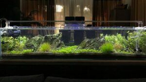 Using Canister Filter Aquascaped by Cris Magsino Philippines