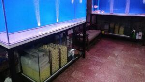 Using Sump Filters Designed by Chrisrock Orongan Philippines