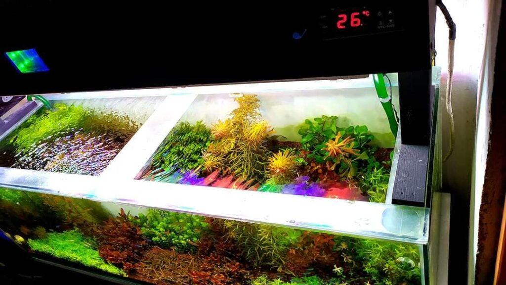 Using a DIY Canister Filter Aquascaped by Jedz Florita Philippines