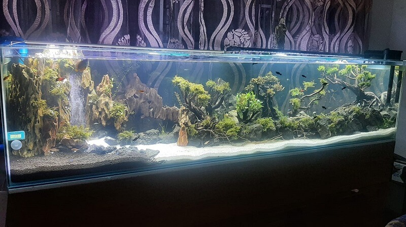 Using a DIY Canister Filter Aquascaped by Liongco Ong Paul Philippines
