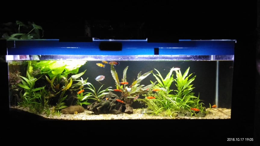 Using an DIY Integrated Sump Filter Designed and Aquascaped by John Joshua Wang JJ Philippines