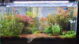 Using an Integrated Sump Filter Aquascaped by Hernani Permalino Philippines