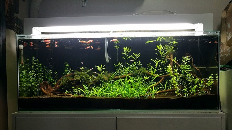 Using an Overhead Sump Aquascaped by Jeano Gabriel Sunico Philippines