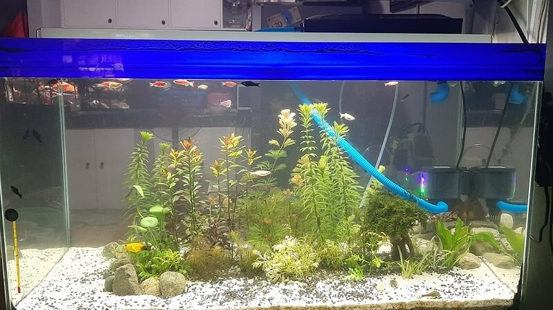 Using an Overhead Sump Filter Aquascaped by Gene Chee Philippines