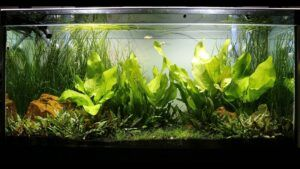 85 Gallons Main Planted Tank Using a 25 Gallons Sump Total 110 Gallons Running - Philippines