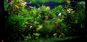 My 35 Gallons Heavily Planted Tank Using a x10 gph Canister Filter