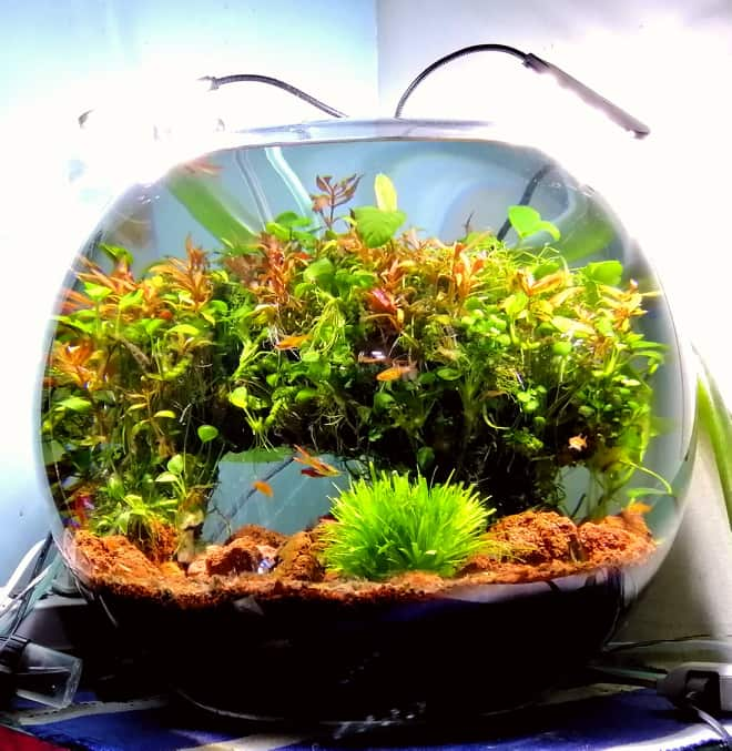 Nature Style 10 Gallons Bowl Using A Canister Filter Aquascaped by Terrence Guillermo