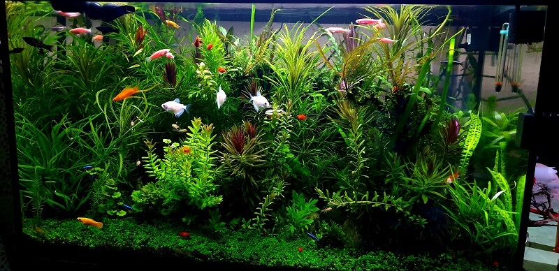 Other Nuances of my Heavily Planted 35 Gallons Using a x10 gph Canister Filter