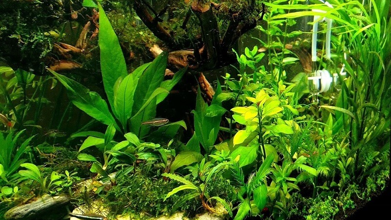 Plants Acting as Biological and Chemical Filters