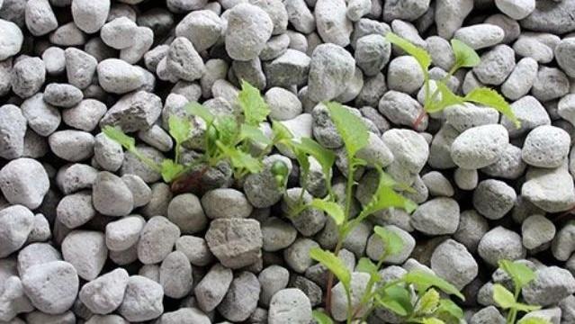 Pumice Rocks
