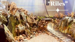 Taiwanese Style Railway Aquascaped by Emerson Manansala Philippines