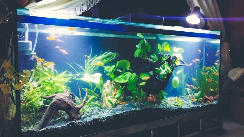 Using a DIY Canister Filter Aquascaped by John Joshua Wang JJ Philippines