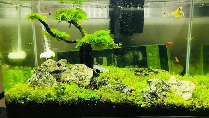 Using a HOB Filter Aquascaped by Daniel Belisario RC Philippines