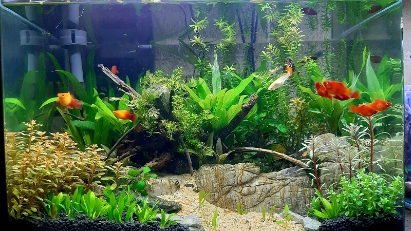 Using a HOB filter Nature Style Aquascaped by Trebor Gabuyo Philippines
