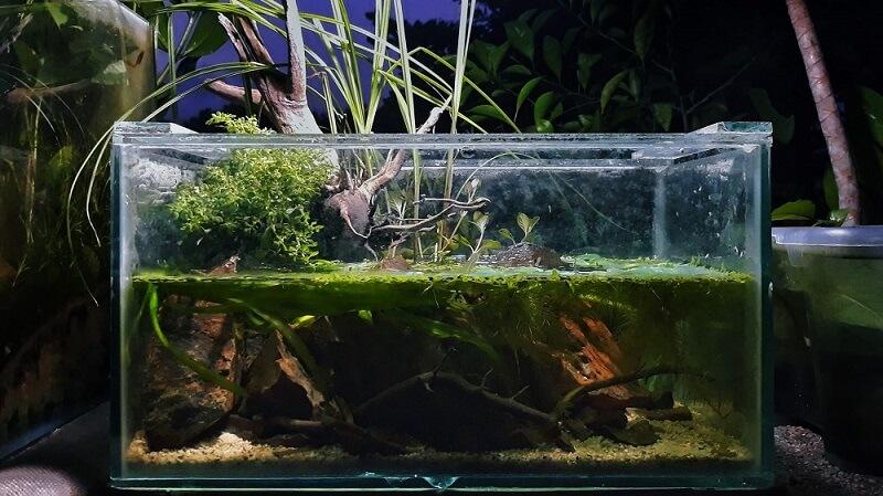 A 67% filled Riparium Aquascaped by Fritz Rabaya Philippines